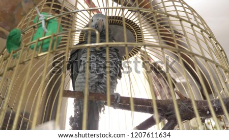 parrot in a golden cage. close-up. the parrot is talking. Stock photo ©
