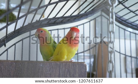 parrot in a golden cage. close-up. view through the bars of the cage Stock photo ©