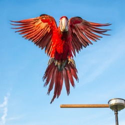 Parrot macaw was flying to catch perch with a backdrop of the sky.