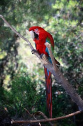 Parrot parrot sits on a branch
