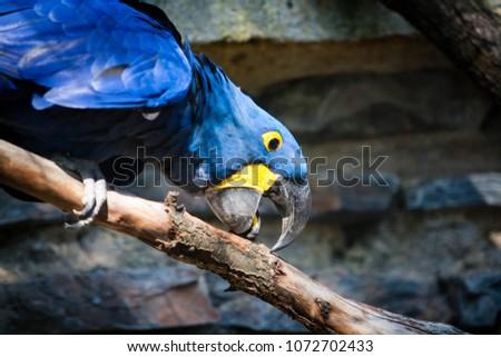 Parrot portrait. Animal photography capturing bird.