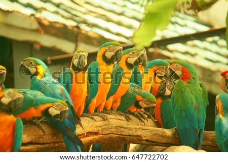 Parrot sitting in a line on a log in a zoo. #647722702