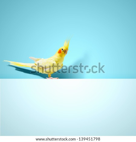 Parrot sitting on blank banner. Place for text