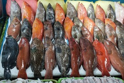Parrotfish, the fish that can save coral reefs were sole in seaside market in Philippines.