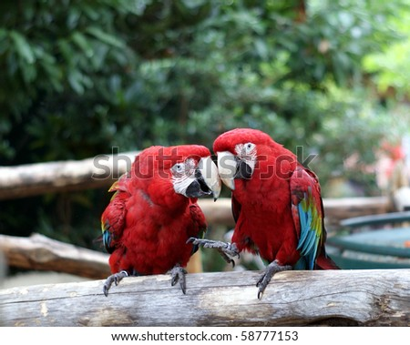 Parrots discussing something