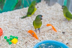 parrots in the cage, pretty birds