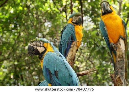 parrots in the forest - stock photo