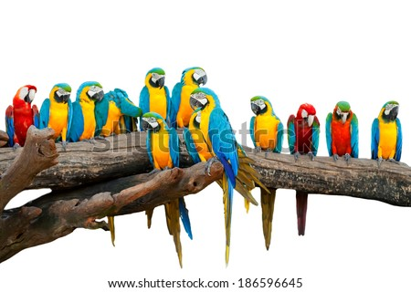 Parrots in the Park Thailand