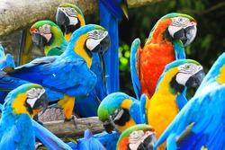 Parrots is colorful bird