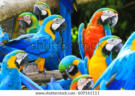 Stock Photo Parrots is colorful bird