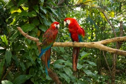 Parrots - Jungle Island, Miami, Florida.