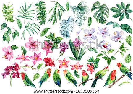 Parrots lovebirds, palm leaves, tropical flowers turmeric, orchid, hibiscus , watercolor botanical illustration