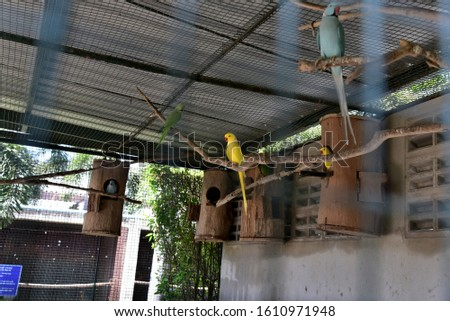 Parrots, which are animals with a variety of colors, are cute in themselves, like making loud noises, like to show naughty gestures, cute to watch, showing graceful posture.