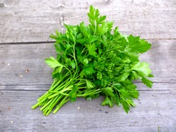 Parsley bunch on wood table background. Fresh parsley on wooden background. Organic italian parsley closeup on rustic board, vegetarian food overhead. Bunch of raw cilantro herb flat lay, top view