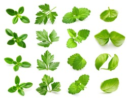 Parsley herb, basil leaves, thyme,mint spice isolated on white background.