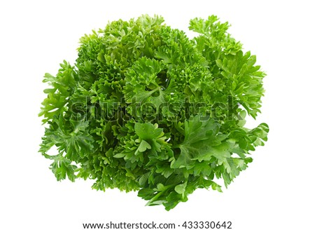 Parsley herb closeup isolated on white background #433330642