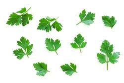 Parsley herb set. Parsley isolated on white background. Parsley on white.