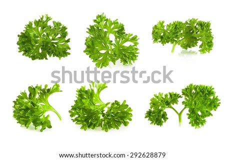 Shutterstock parsley isolated on a white background