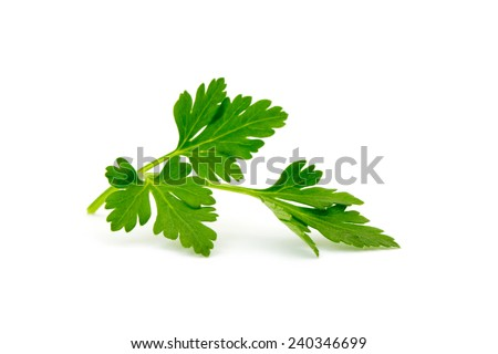 Shutterstock parsley isolated on white