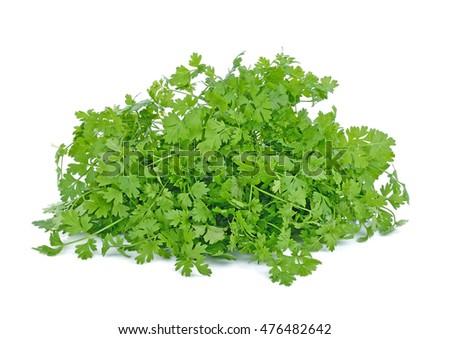 parsley isolated on white background. #476482642