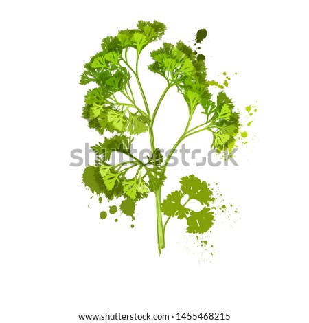 Parsley isolated on white background. Anethum graveolens. Annual herb in the celery family Apiaceae. Healthy food natural organic plant. Evergreen herb with culinary and medicinal uses. Digital art