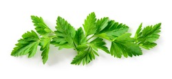 Parsley isolated. Parsley background. Parsley leaf on white. Parsley leaves top view. Full depth of field.