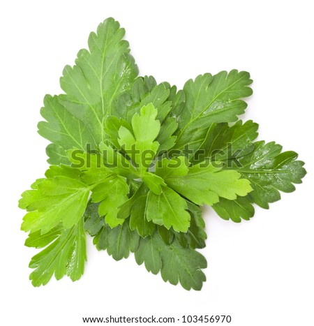 Parsley leaves with a light shadows isolated on white background, closeup