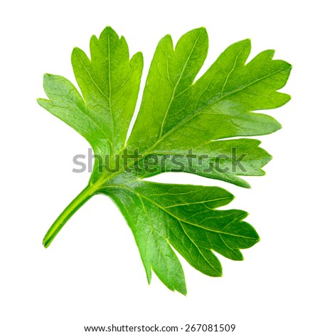 Shutterstock Parsley. one leaf isolated on white background.