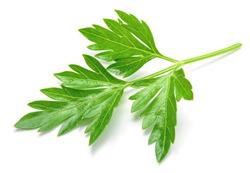 Parsley. Parsley leaf. Parsley isolated.