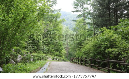 part in the forest. June 23, 2020 Gang Sibong, Gapyeong-gun, Gangwon-do, Korea