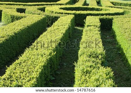 Part of a garden hedge maze
