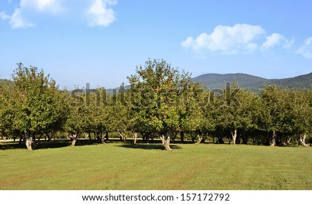 Part of an apple orchard with mountains in the distance.