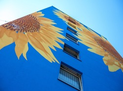 Part of an artistically painted house, skyscraper reaching for the sky, with huge sunflower blossoms on blue house wall, windows, mural painting, copy space