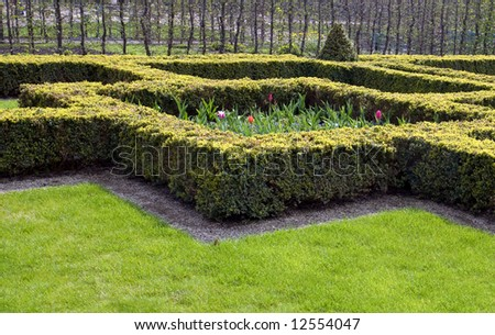 Part of beautiful garden with cuted bushes and tulips