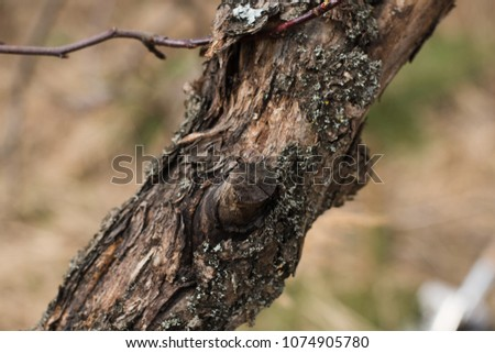 part of dried tree close up on natural background #1074905780