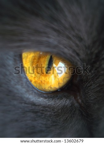 part of gray cat face, orange eye