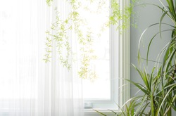 Part of the interior, green houseplants by the window with a translucent white curtain