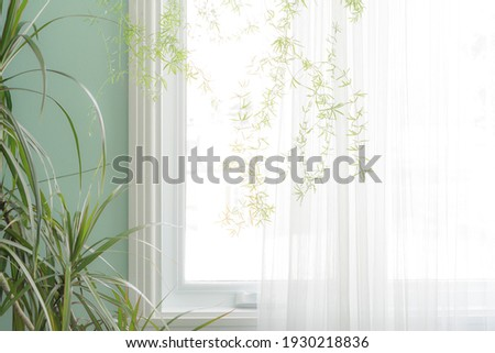 Part of the interior, green indoor plants by the window with a translucent white curtain Stockfoto ©