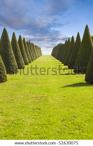 Parterre or conical hedges lines and lawn from Versailles Chateau. France