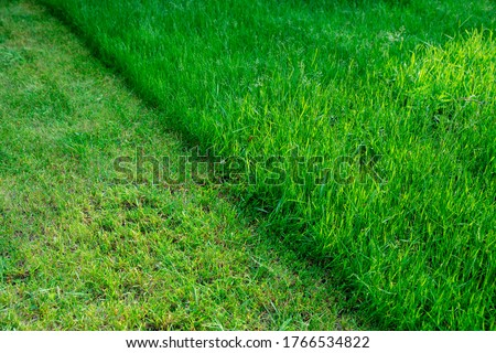 Partially cut grass lawn. Green fresh grass. Difference between perfectly mowed, trimmed garden lawn or field for sports and long uncut grass. Lawn, carpet, natural green trimmed grass field