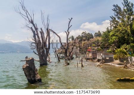Partially submerged trees near San Marcos La Laguna village, Guatemala #1175473690