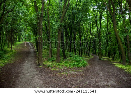 Parting of the ways in a green summer forest.