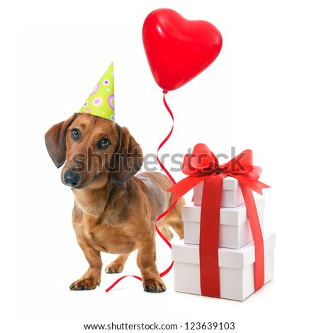 Party dog with party hat,  gift boxes and balloons. Isolated on white background
