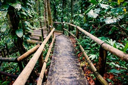 passage in the jungle deep green exotic foliage