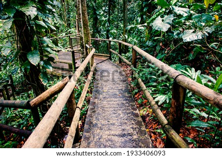 passage in the jungle deep green exotic foliage Photo stock ©
