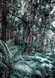 passage in the jungle tidewater green foliage