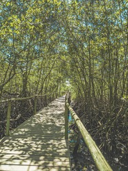 passage on a wooden walkway covered by trees in the wild