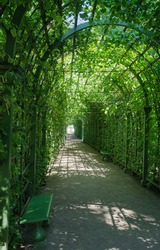 passage through the arch entwined with plants