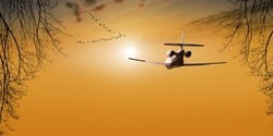Passenger plane above the clear orange sky flying towards the sun. beautiful sunset view. silhouette of tree branches