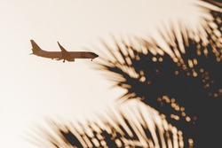 Passenger plane prepares to land in tropical country. Silhouette of flying aircraft and palm tree leaves on sunset sky. Open boarders. Hurghada, Egypt.
